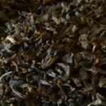 darjeeling-margarets-hope