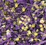 Malva-fiori-blu