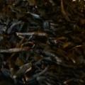 tè-nero-frutti-di-bosco